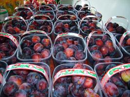 Fruitteeltbedrijf voor Pruimen