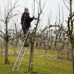 Fruitteeltbedrijf ladder