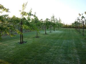 Vernieuwing Fruitteeltbedrijf Oudebosch
